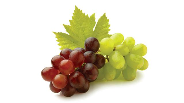 vini-caroli